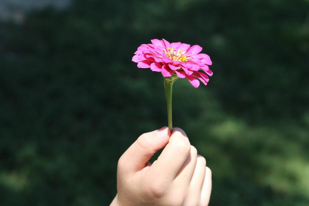 flower-574653_1920 (2)